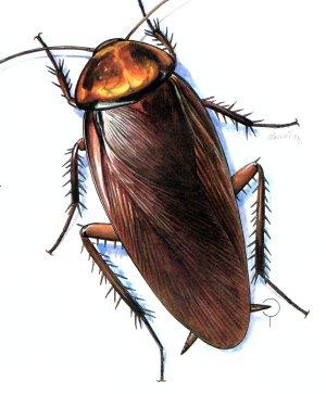 عد لخمسة ورمي الصرصور على اي عضو تختاره هههههههههههههه Cockroach1